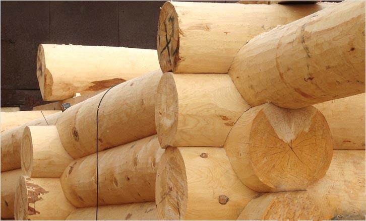 Из какого дерева лучше строить баню и почему